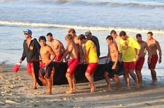 lifeguard_8891 copy