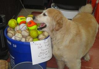 Coaster Photo - Simon loves to find lost baseballs and softballs.