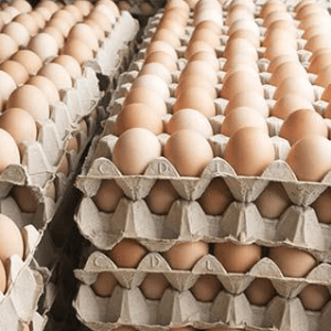 The Coeur d Alene Coop Egg in Cartons