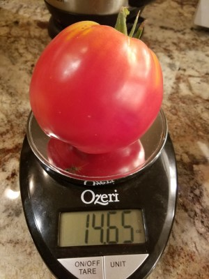 Amos Coli Heirloom Tomato | The Coeur d Alene Coop