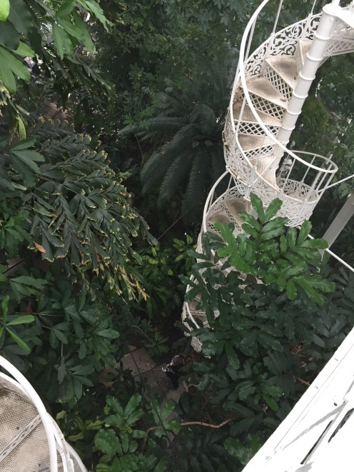 The spiral staircase leading to the upper deck of the greenhouse