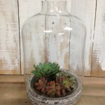 Succulent planter terrarium at The Collective lhe + Makery