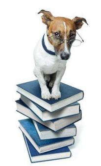 teach this command training commands for dogss