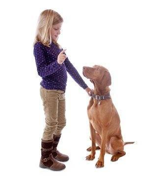 Be a Guard Dog