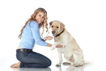 Pet To Socialize