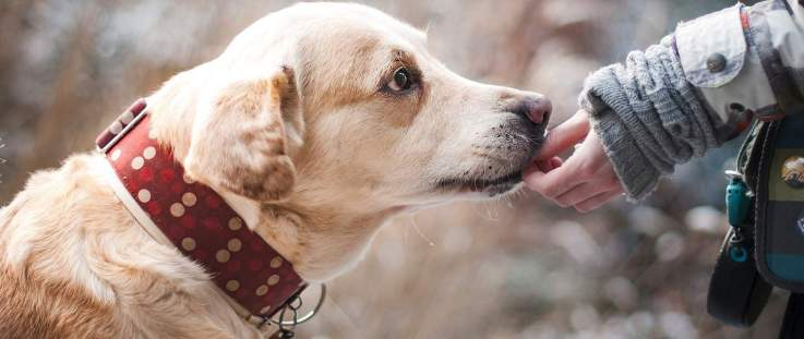 Positive Reinforcement [Easy Tips To Success In Training Your Dog] 1