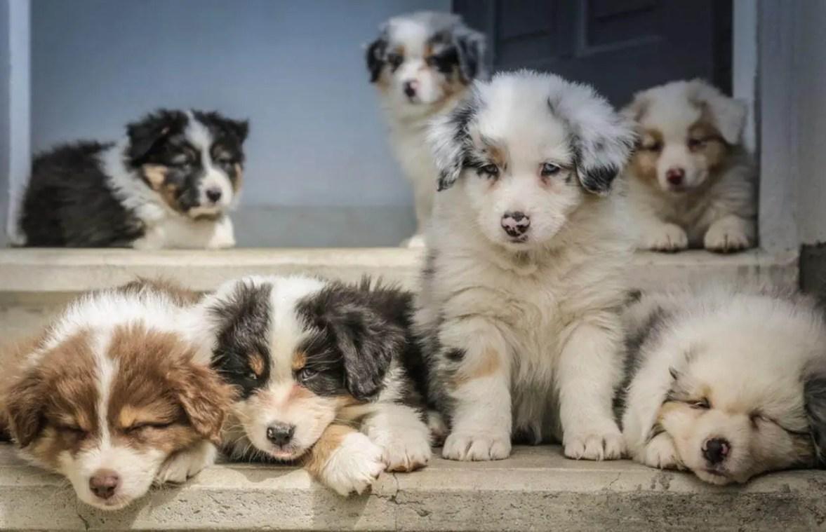 Come Educare & Addestrare Un Cucciolo Di Cane Nel 2020 45