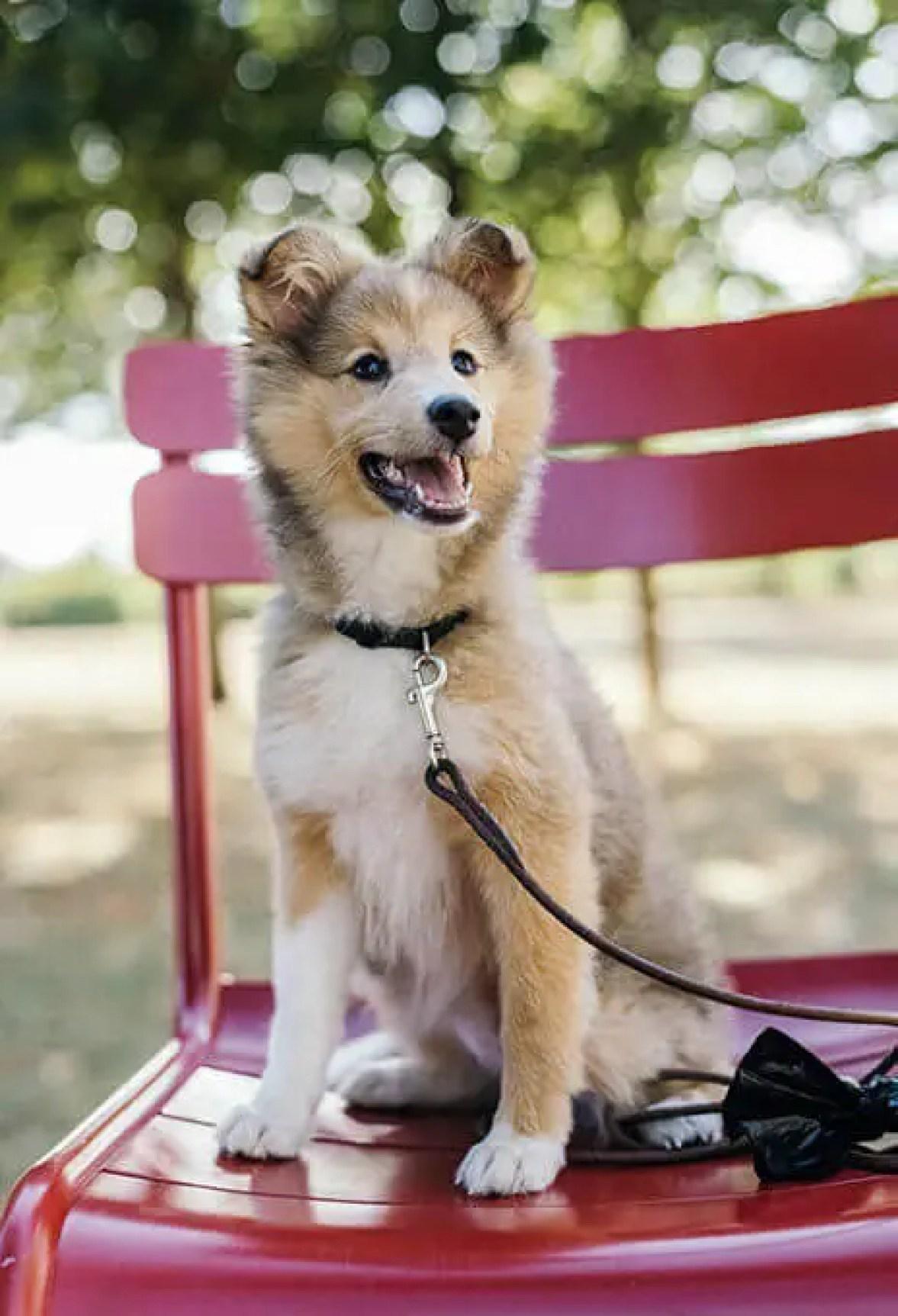 educare addestrare un cucciolo a camminare con il guinzaglio