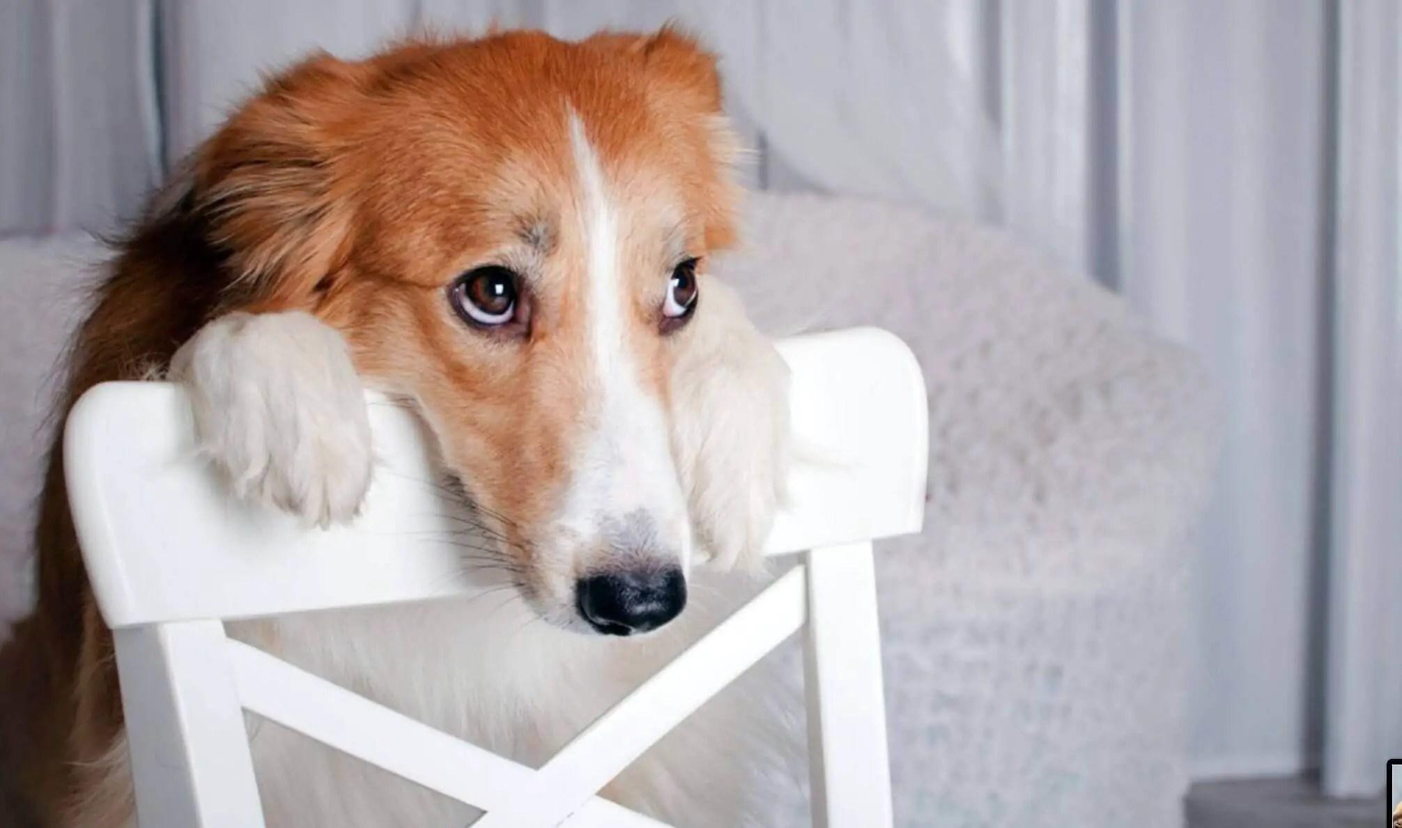 educare addestrare cucciolo a non fare pipi in casa