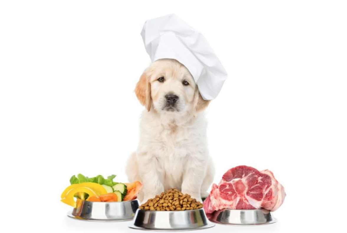 labrador homemade dog food healthy