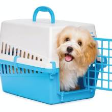 dog training with the crate housebreaking