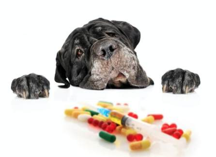 dog pills caring tips for your dog