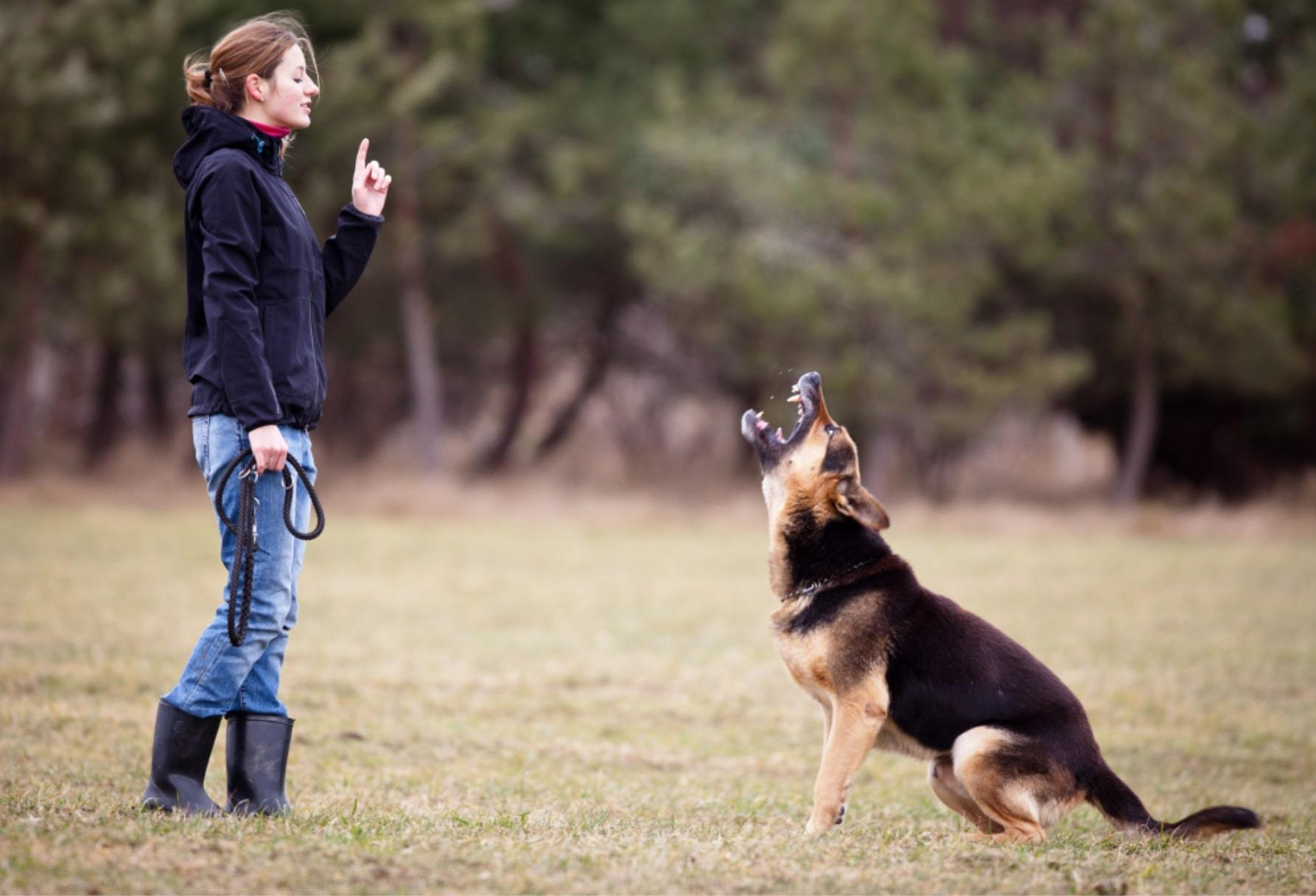 dog barking on command obedience training with owner dog training