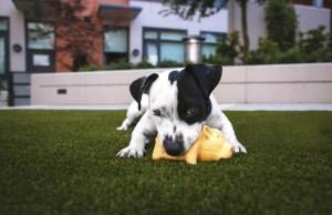 dog bite toys
