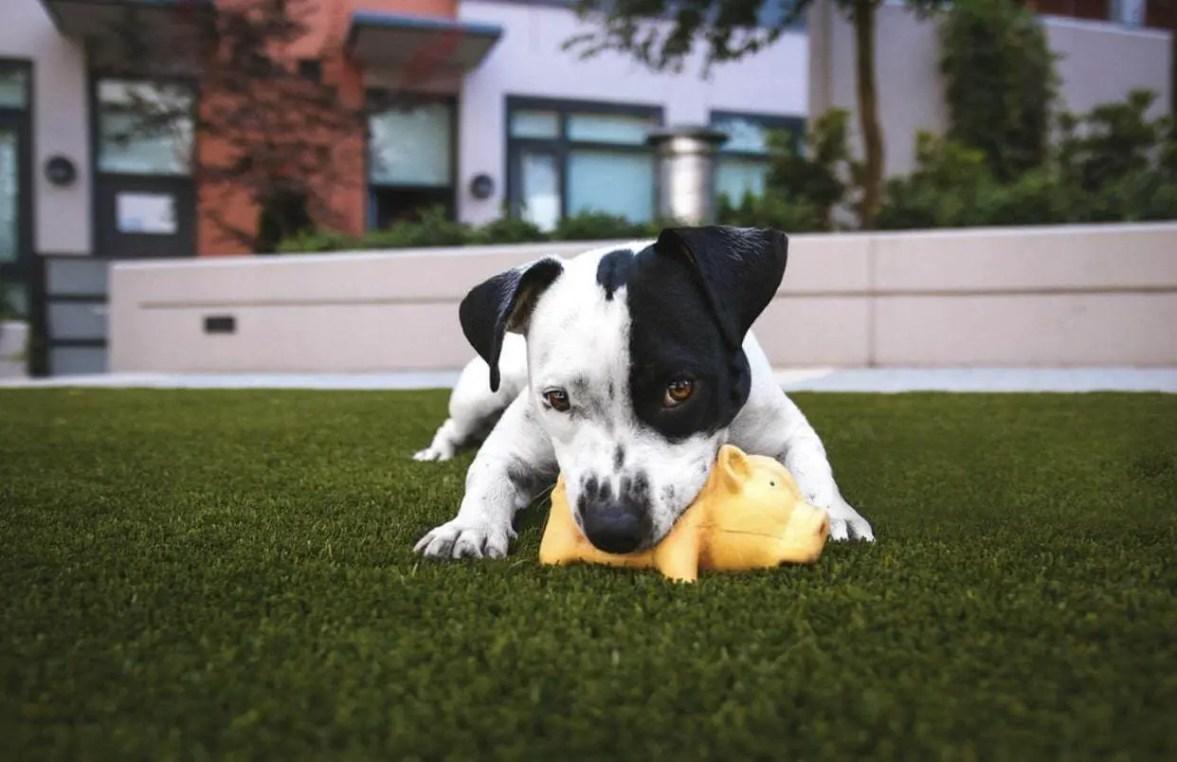 Come Educare & Addestrare Un Cucciolo Di Cane Nel 2020 86