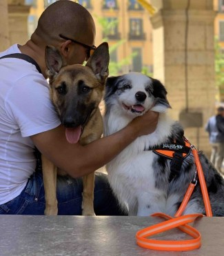 samayo malinois bordercollie julius k9 lumino leash orange neon