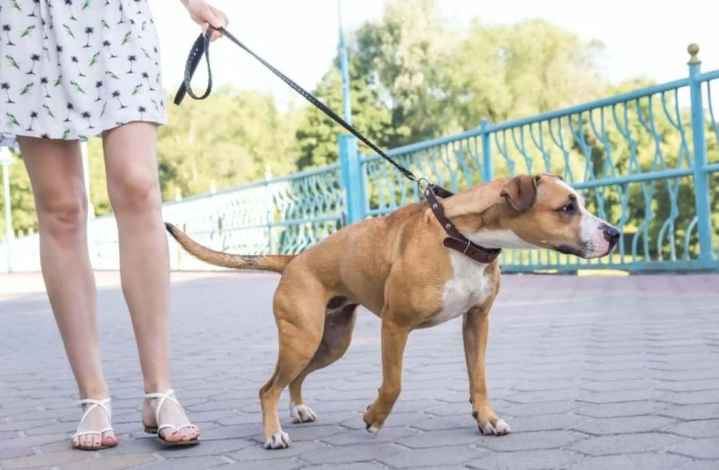 Differenza educazione e addestramento cani