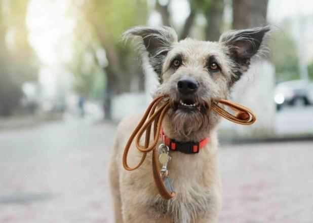 addestrare un cane addestramento del cane con i comandi in tedesco