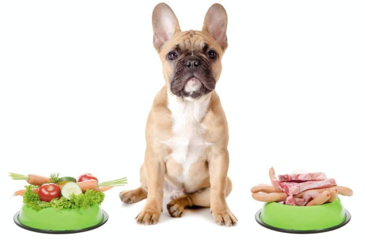 healthy homemade vegan dog food diet french bulldog with meat and vegetables