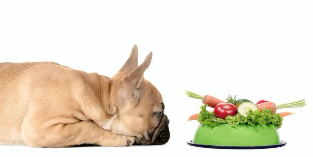 French bulldog vegan dog food recipes