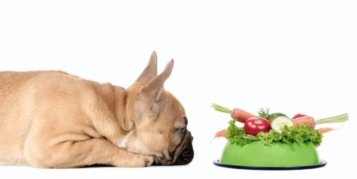 French bulldog vegan dog food recipes