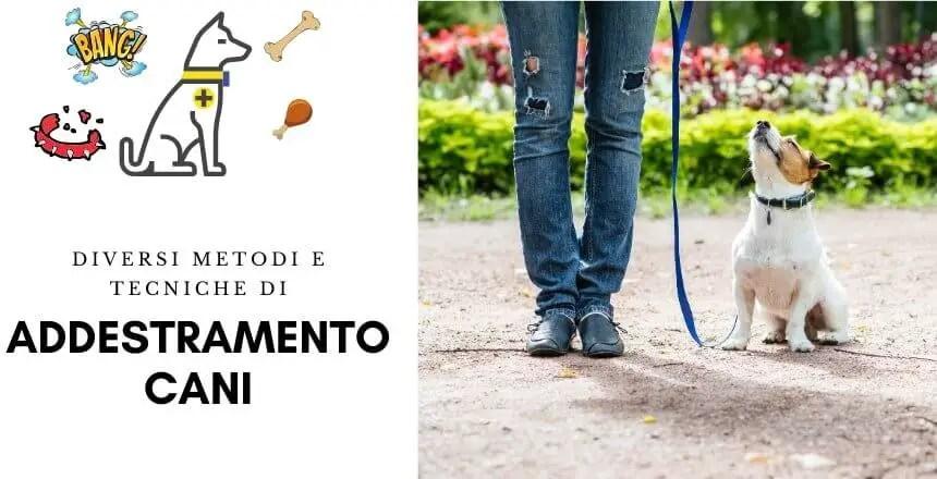 Addestramento Del Cane | I Metodi Per Addestrare Un Cane