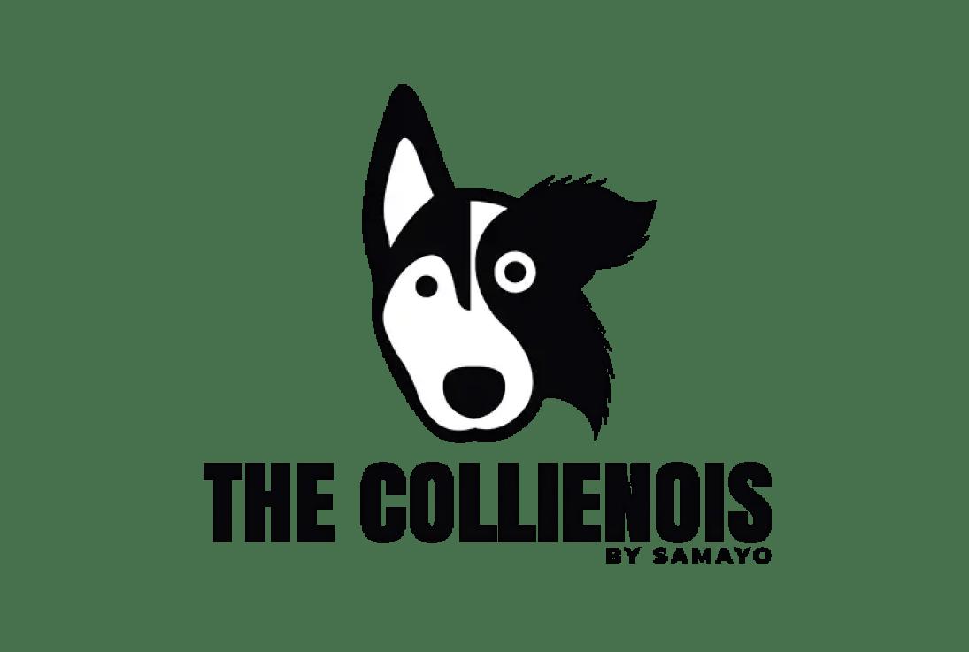 Come Educare & Addestrare Un Cucciolo Di Cane Correttamente 79