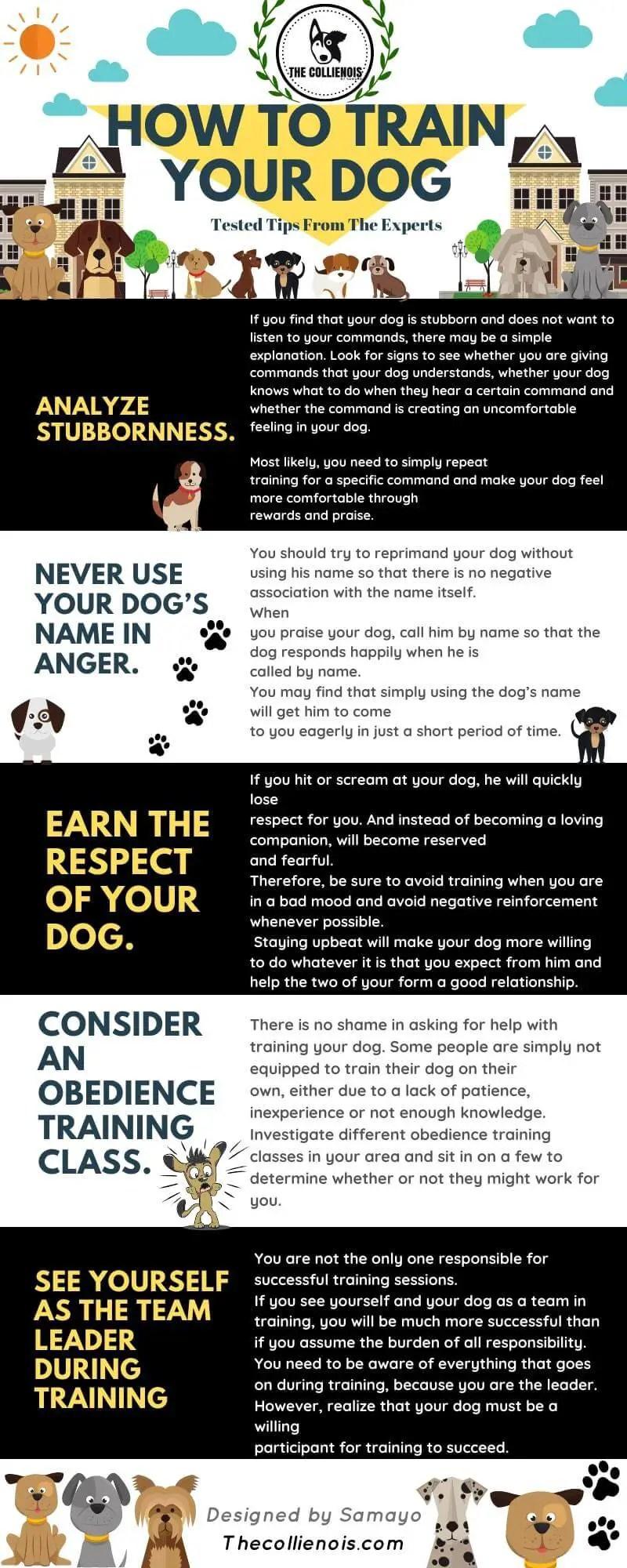best Dog training tips infographic