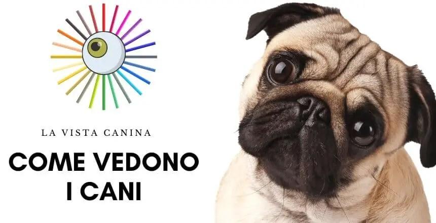 Come vedono i cani i colori e al buio- la vista del cane