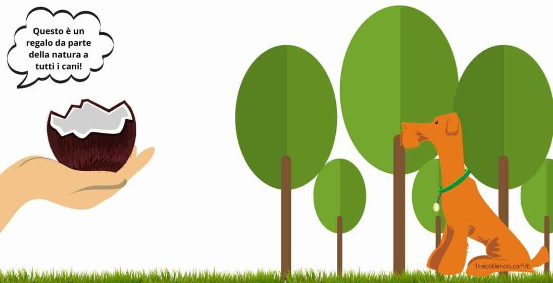 Si può dare Olio di cocco ai cani - benefici - proprietà benefiche - uso.jpg