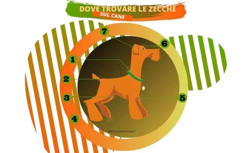 La Zecca Del Cane | TUTTO Quello Che Devi Sapere [Guida 2020] 1
