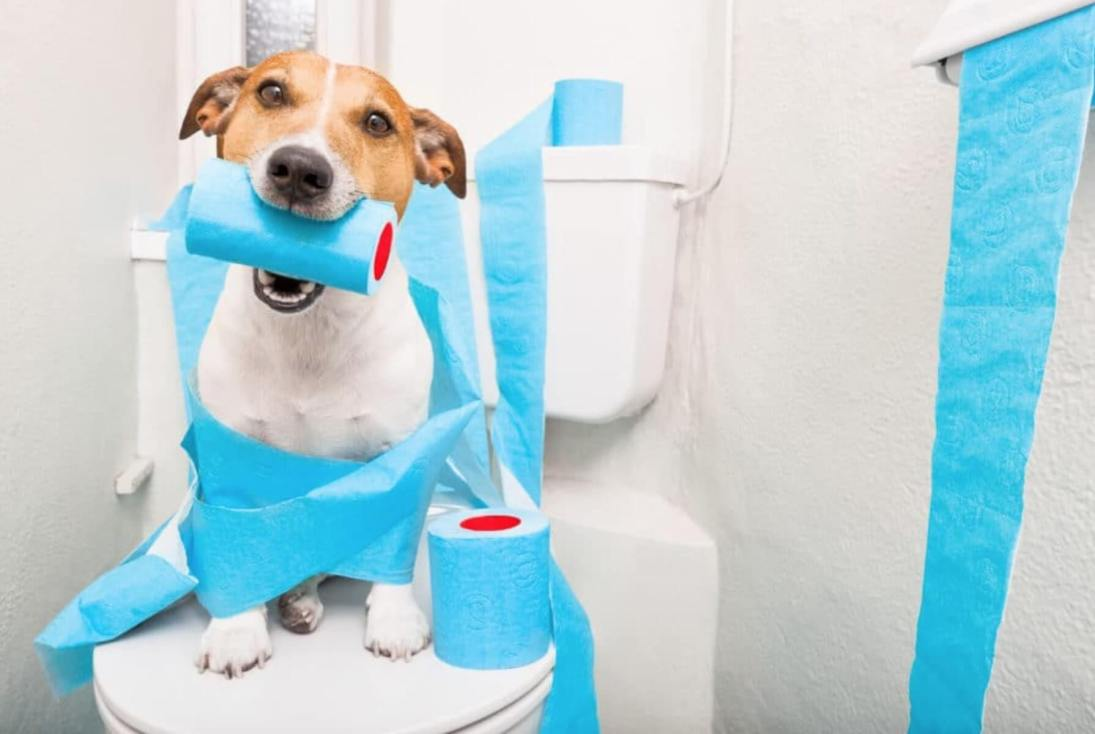 la Guida sulla diarrea nel cane, sintomi, cura, rimedi naturali, cosa fare, cosa non fare, e molto altro ancora10