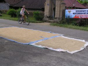 Pepper being dried on mats on the road