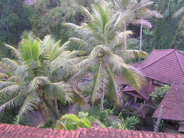 The view from my villa at the Bali Spirit resort in Ubud