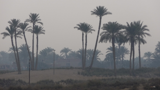 Palm trees through the Cairene smog