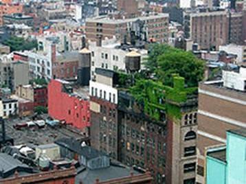 Green roof in Manhattan