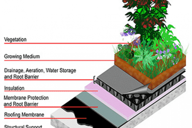 Green Roofing: A Step Towards Sustainability