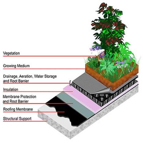 Cross-section of a green roof