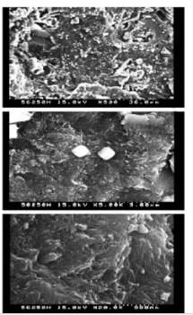 SEM of GGBS Replaced Concrete