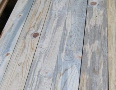 Blue Stain in Timber