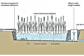 Constructed Wetlands: Components, Mechanism, and Advantages