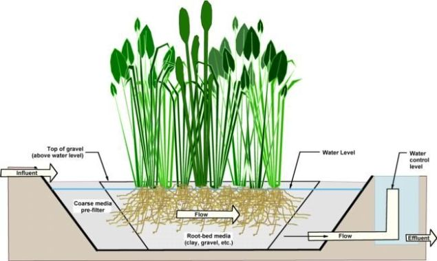 Components of Constructed Wetlands