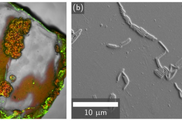 New Way to Improve Strength of Plastic-Reinforced Cement Mortar
