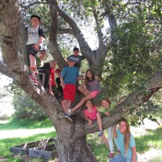 botany class in tree