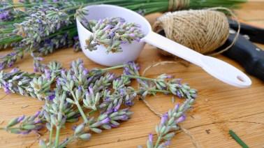 Lavender for Ice Cream