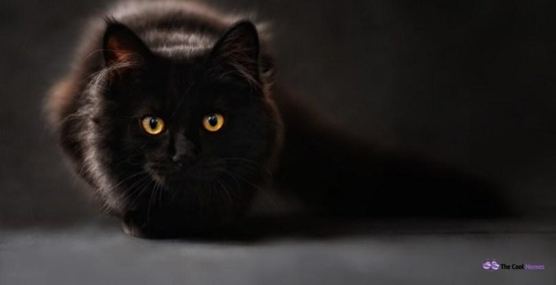 Female Black Cat Names
