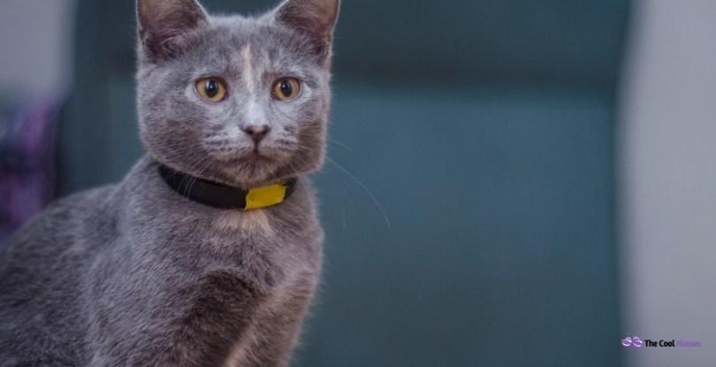 Female Gray Cat Names