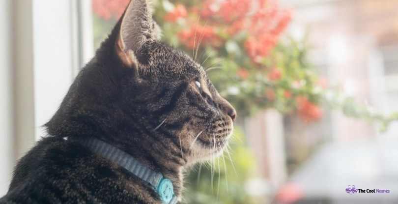 Personality of Tabby Cat