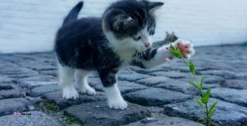 What are Some Best Food Names for Cats