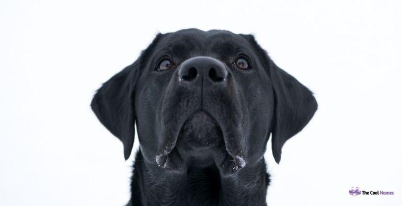 Unique black and white Dog Names
